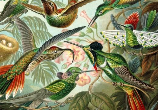 Ciencia y lápices I. Ernst Haeckel