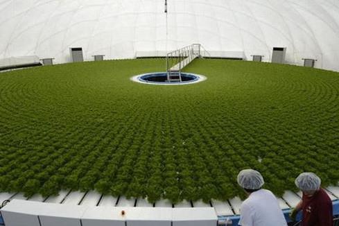 Agricultura sin suelo: reflexiones hidropónicas