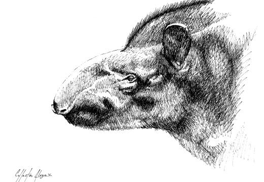 Fauna guaraní: mboreví