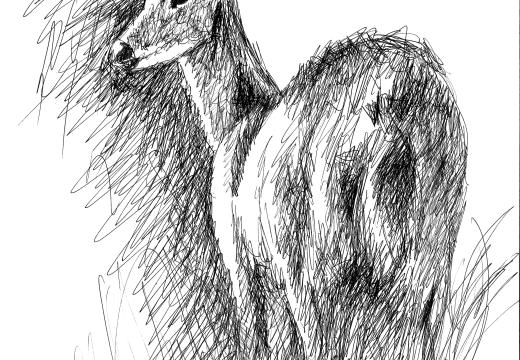 Fauna guaraní: ciervo de los pantanos