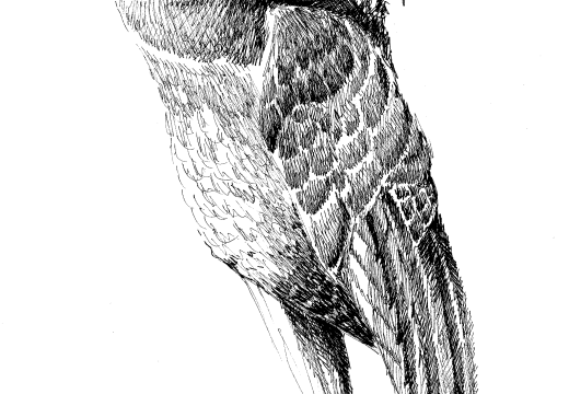 Fauna guaraní: Mbyju'i ita