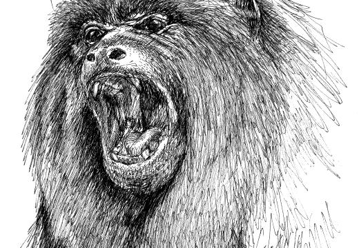 Fauna guaraní: El Carayá