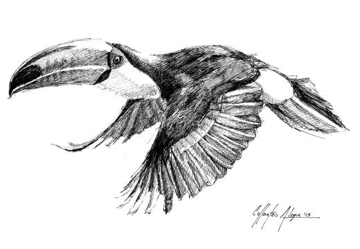 Fauna ilustrada – Tucán