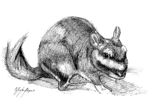 Fauna guaraní: Vizcacha