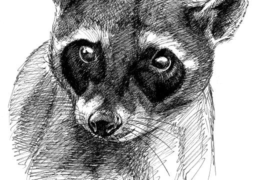 Fauna guaraní – Aguará popé