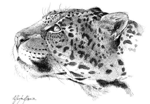 Fauna guaraní: Yaguareté
