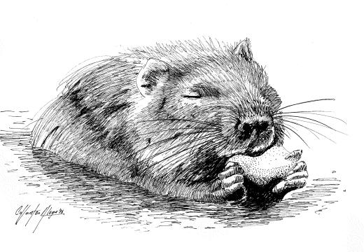 Fauna guaraní: el coipo