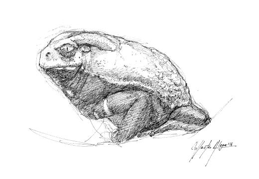 Fauna guaraní – Rana mono