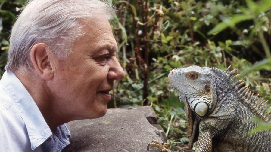 Senior iguana