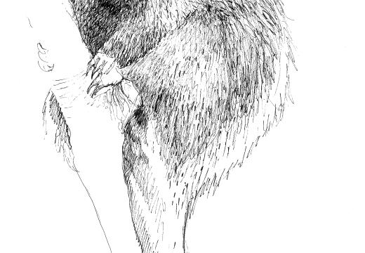 Fauna guaraní: el coendú