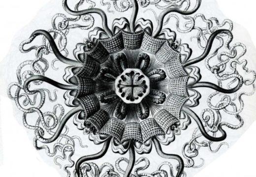 Ciencia y lápices VII: De nuevo con Ernst Haeckel