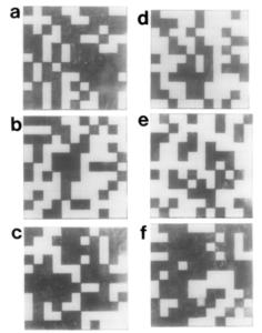 Resultados de las imágenes de las bases en los codones del gen B