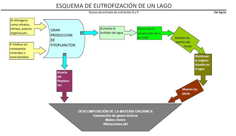 Esquema sobre el proceso de eutrofización. http://aguaymascosas.blogspot.com.es/