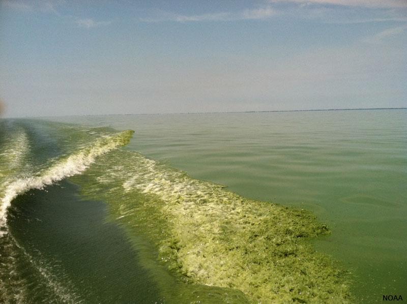 Imagen del lago Erie a pie de campo. fte:NOAA