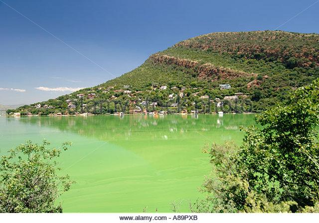 Explosión de algas en Harbeespoort Dam en Sudáfrica