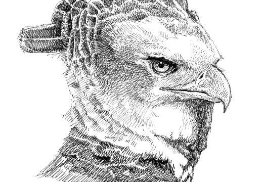 Fauna guaraní: Águila harpía