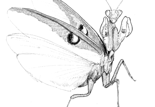 Fauna guaraní: mamboretá