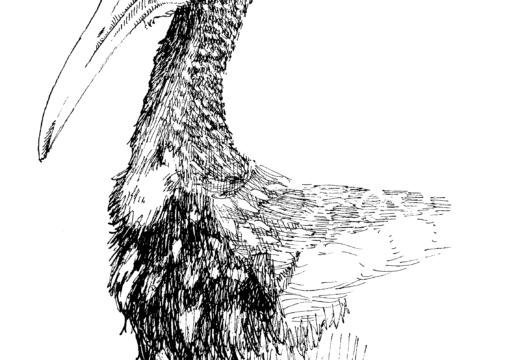 Fauna guaraní: Carau