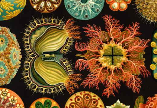 Las (¿infinitas?) posibilidades de la biología