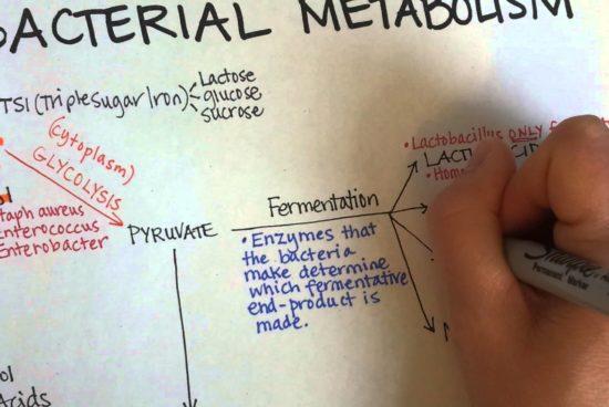 Symply Science [Vídeo]: Proteómica y metabolismo bacteriano